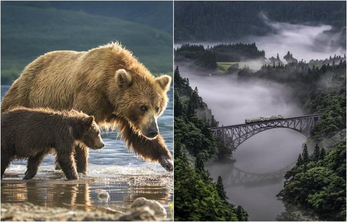 Опубликованы первые работы фотоконкурса National Geographic Nature Photographer Of The Year 2017.