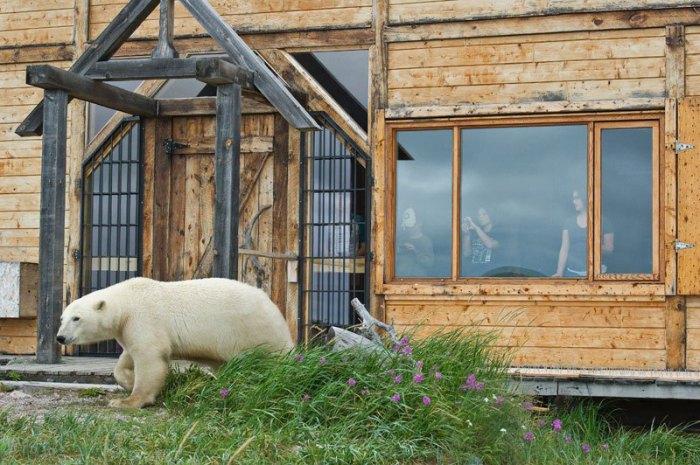 Отдыхающие отеля могут увидеть полярных медведей в непосредственной близости.