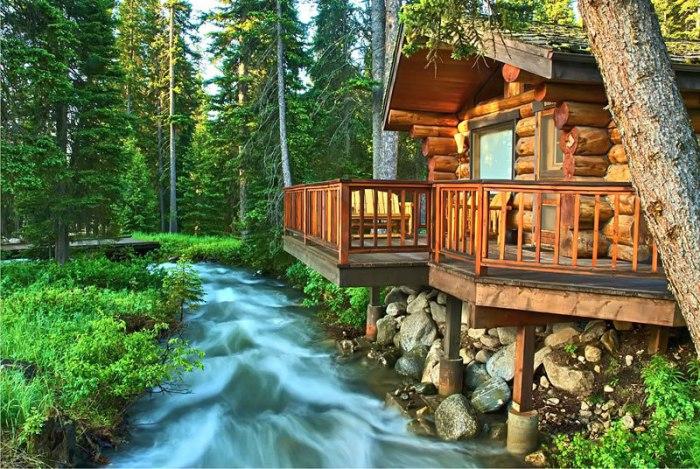 Ранчо в удивительном еловом лесу.