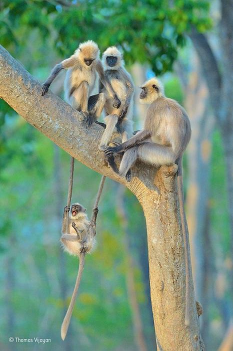 Фотограф Thomas Vijayan.
