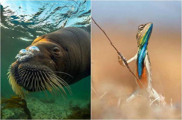 Самые интересные снимки дикой природы.