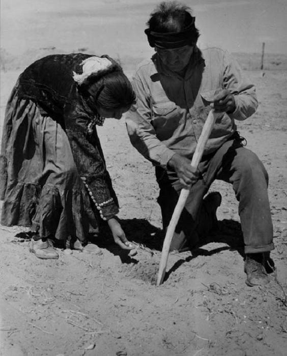 Отец и дочь садит кукурузу, недалеко от города Туба. Аризона, 1948 год.