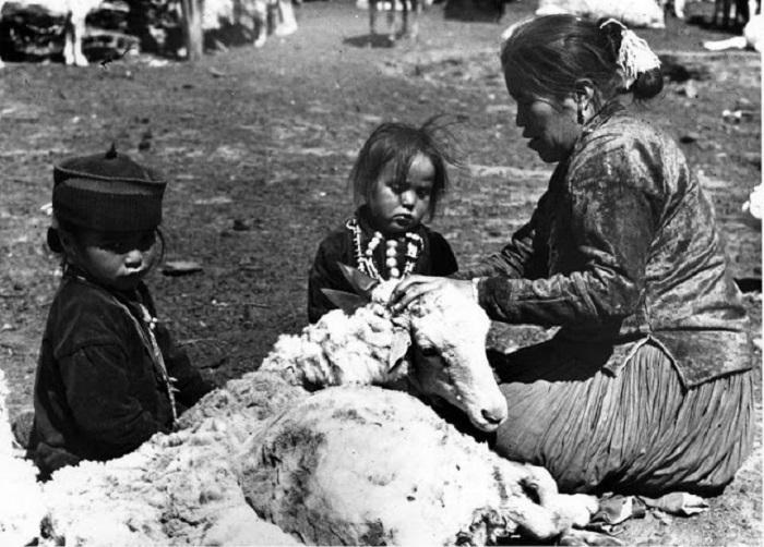 Стрижка овец. Недалеко от города Туба, Аризона, 1948 год.