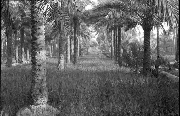 Окрестности Багдада.
