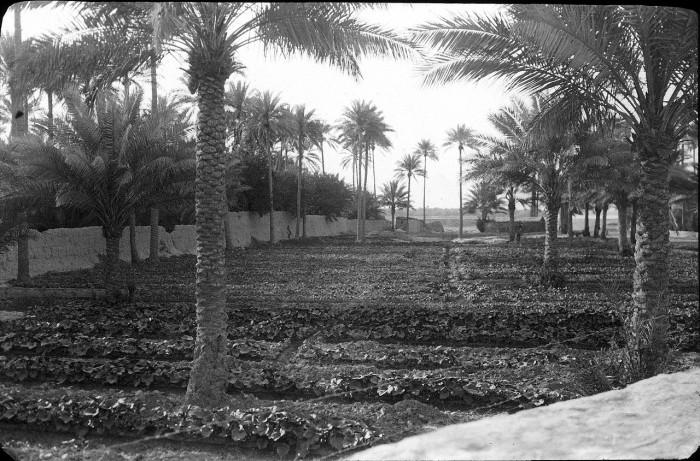 Орошаемые земли Багдада.