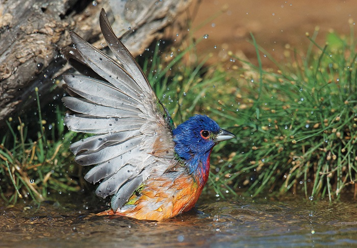 Победители Одюбоновского фотоконкурса 2015, показавших невероятную красоту птиц.