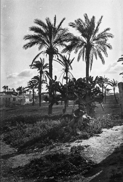 Изящные пальмы в Яффо.
