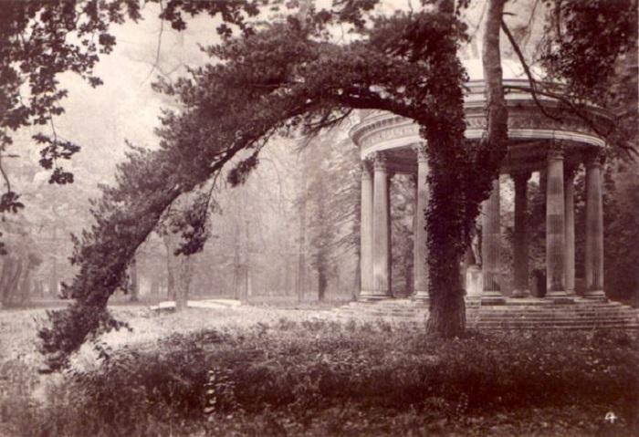 Жан Пьер Ив Пети крупным планом захватил дерево, что подчёркивает особенность снимка.