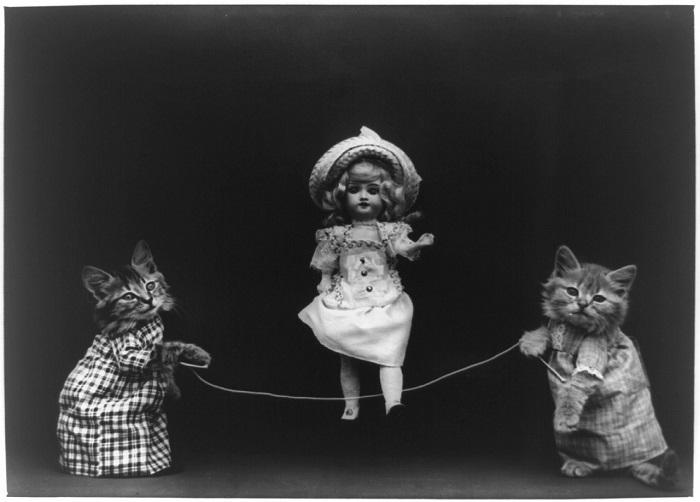 Забавные котяточки.