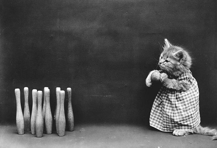 Кошка учится играть в боулинг.