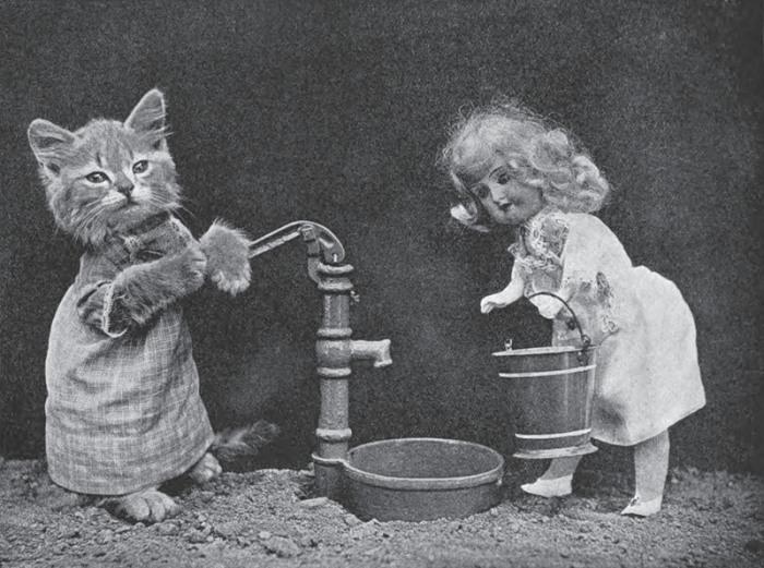 Вода для полива.