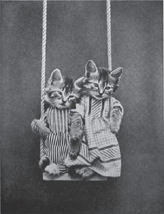 Котята в полудрёме.