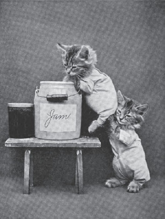Котята-сладкоежки, хотя джем...?