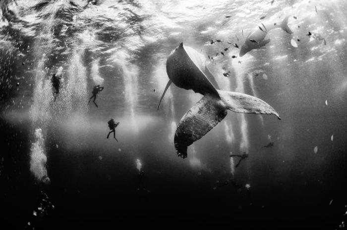 Мексиканские дайверы фотографируют горбатого кита.