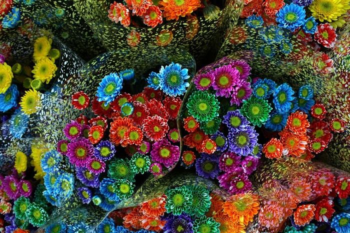 Ярмарка цветов Feria de las Flores - одно из самых ярких летних событий в Медельине.