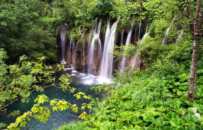 Буково-хвойный лес, с чистым и свежим воздухом.