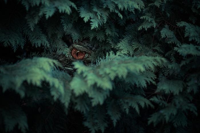 В засаде. Автор фотографии: Андрей Войт (Andreas Voigt).