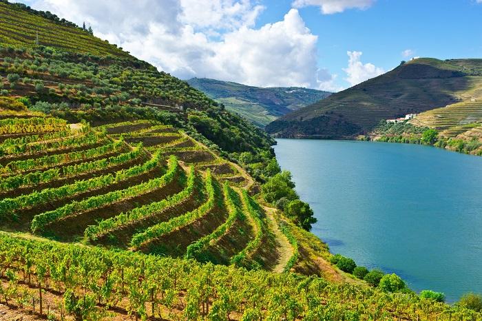 Виноградная лоза в Португалии символизирует изобилие, здоровье и семейный очаг. Фотограф - Татьяна Лискер.