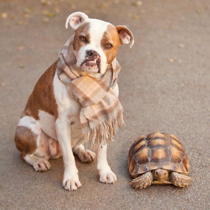Удивительная дружба между этими двумя такими непохожими созданиями возникла, когда они еще были малышами - вместе отдыхали, гуляли и принимали солнечные ванны.