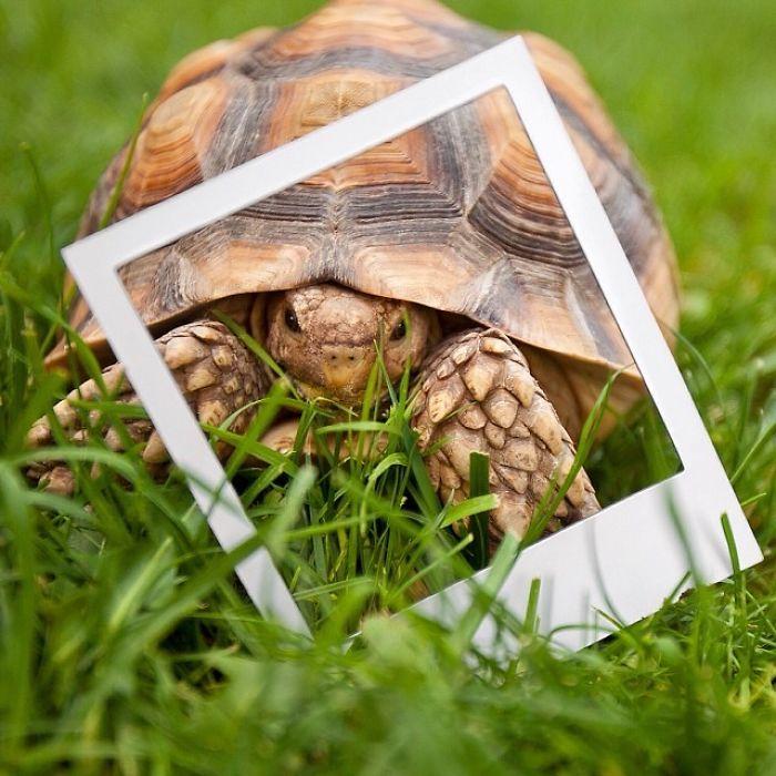 Шпороносую черепаху, которая считается крупнейшей среди африканских черепах и третьей по величине в мире, оставили на время еще в 2009 году, но после хозяин за ней так и не вернулся.