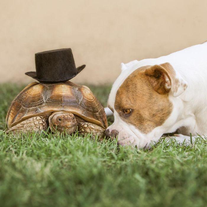 Жизнь становится лучше, когда рядом есть верный друг.