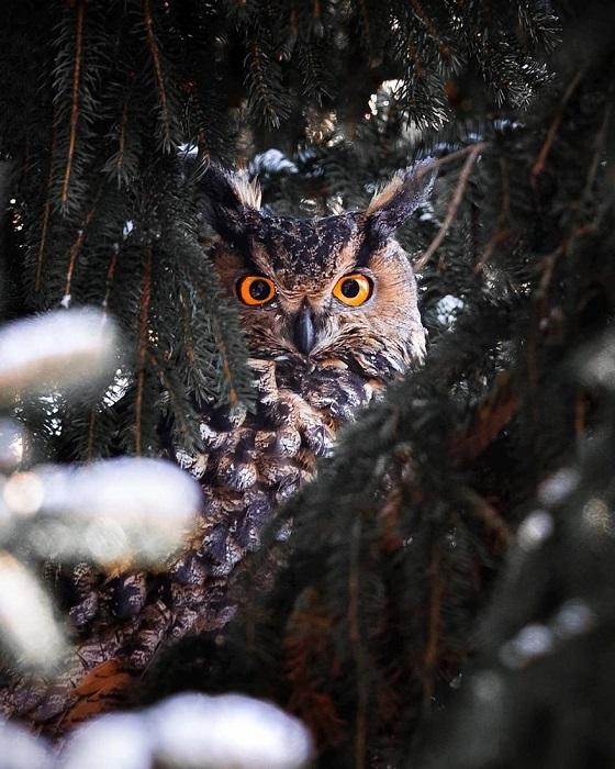 Но еще больше терпения требуется, когда долгожданная встреча с лесным обитателем все же состоялась.