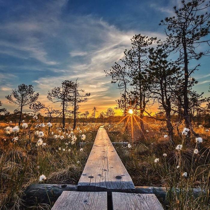 В своих волшебных работах фотограф очень точно передает всю красоту и хрупкость дикой природы.