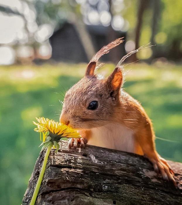 Чаше всего героями необыкновенно позитивных снимков Осси Сааринена становятся белки, лисы и птицы.