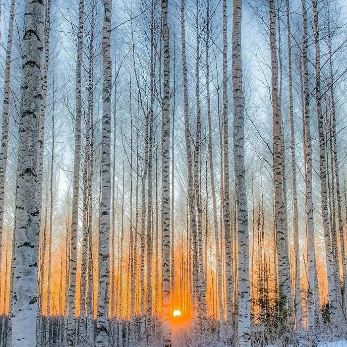 Осси Сааринен очень увлечен фотосъемкой дикой природы – особенно многочисленных нетронутых лесов и их разнообразных жителей.
