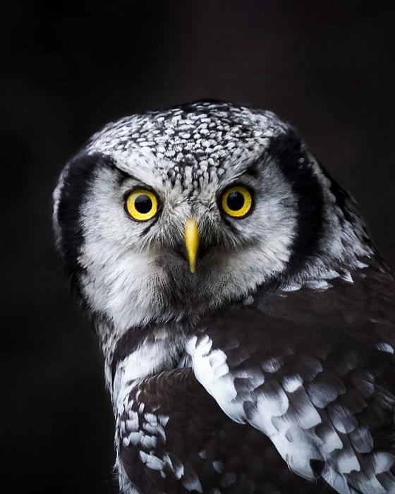На фотографиях Осси Сааринена запечатлены многочисленные звери и птицы, которых мастер снимал в их естественной среде обитания.