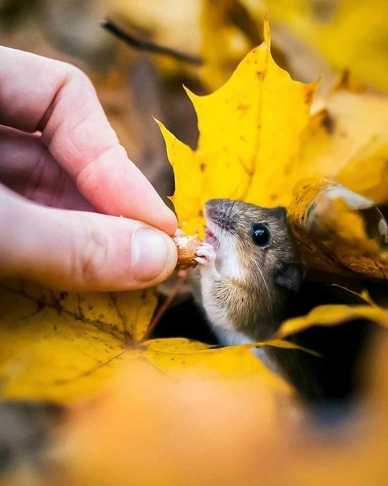 Большую часть своих завораживающих фотографий Осси Сааринен снимает в Южной Финляндии.