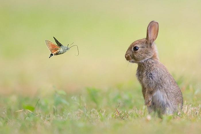 Заяц внимательно смотрит на приближающуюся к нему бабочку.