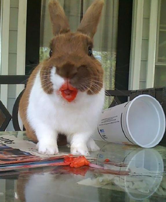 Как вам мой морковный цвет помады?