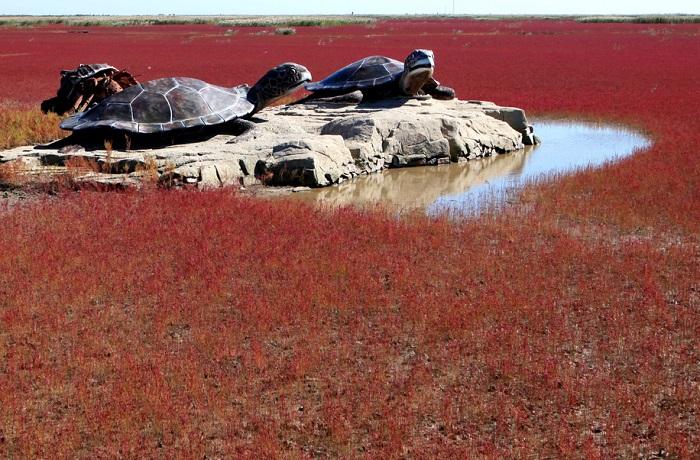 Берег реки Ляохэ усеян морскими водорослями Sueda, к сентябрю, отмирая, водоросли постепенно приобретают ярко-красный цвет.
