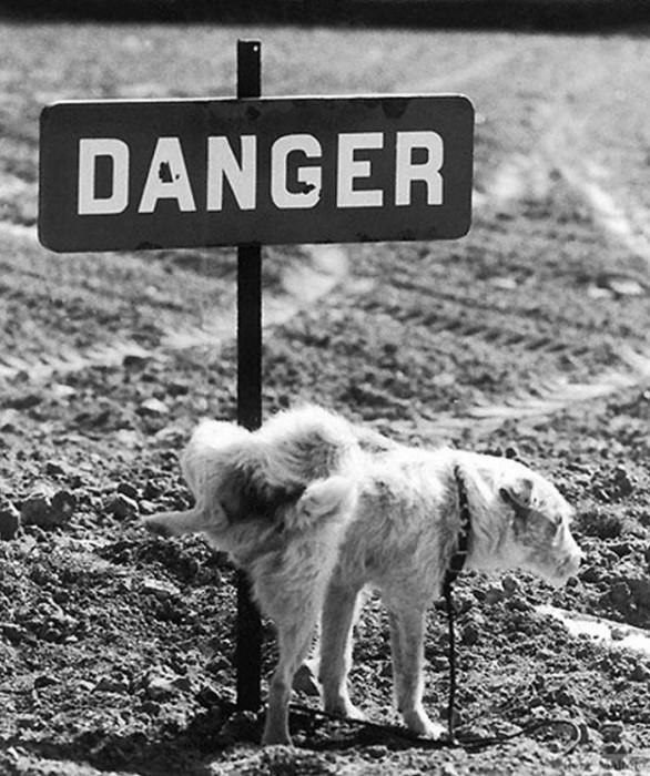 А пёс читать то не умеет.