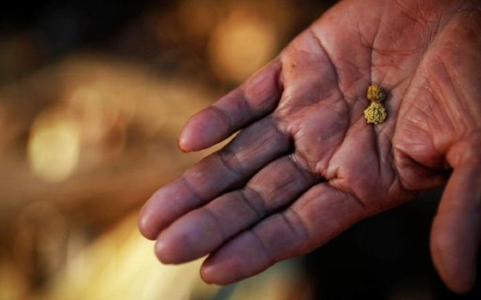 Золото здесь крупное, хорошо окатанное, часто срастается с кусками кварца. Наиболее крупные самородки встречаются в вершине ручья, под крупными валунами.