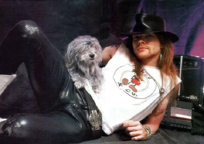Вокалист групп «Guns N' Roses» и «AC/DC» вместе с любимицей – мальтийской болонкой Женевой.