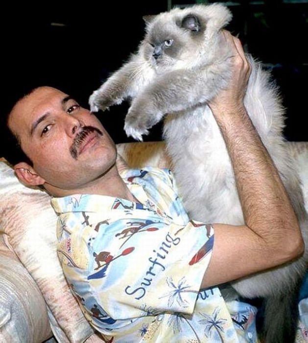 Фронтмен британской группы «Queen» с одним из любимых котов по кличке Оскар.