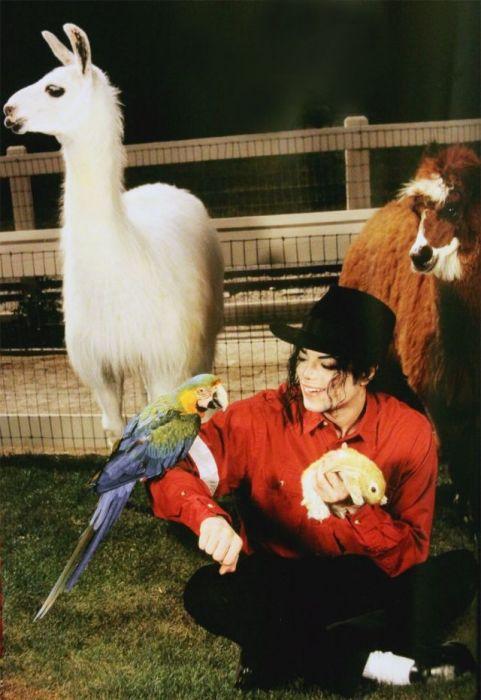 Король поп-музыки с различными животными в собственном частном зоопарке «Neverland».