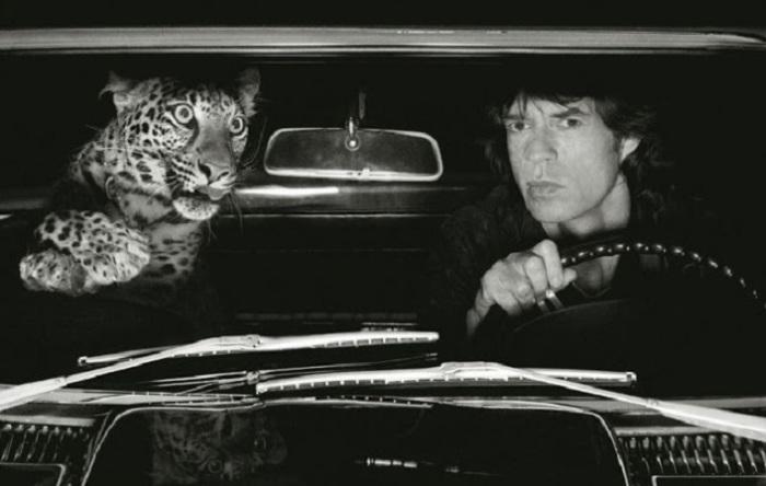 У вокалиста британской рок-группы «Rolling Stones» на самом деле не было леопарда…правда?