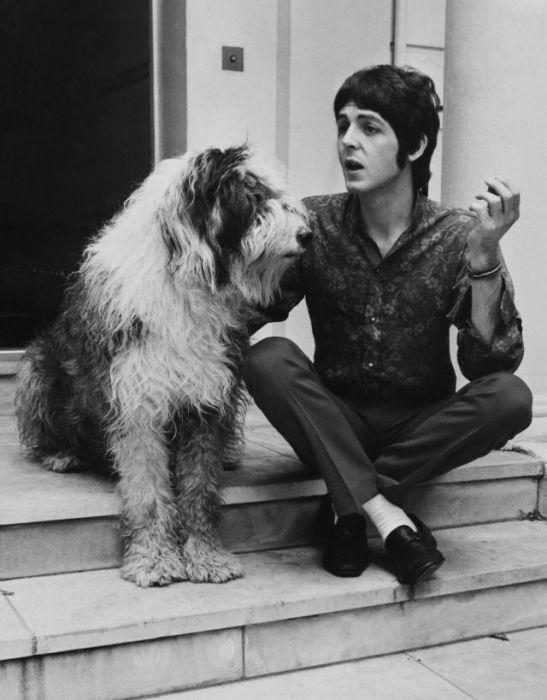 Британский мультиинструменталист со своей собакой Мартой породы бобтейл.