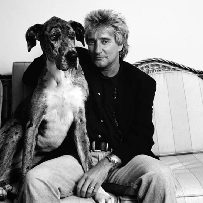 Британский певец из домашних питомцев больше всего любил собак, отдавая предпочтение представителям крупных пород.
