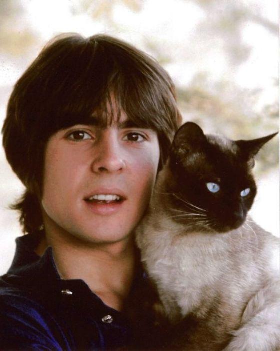 Вокалист американской группы «The Monkees» с голубоглазым любимцем сиамской породы.