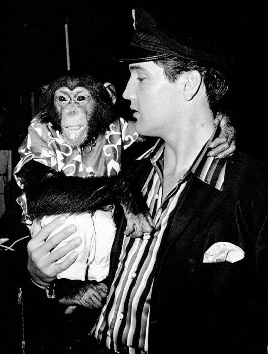 Экзотический домашний питомец «короля рок-н-ролла» - шимпанзе по кличке Скаттер.