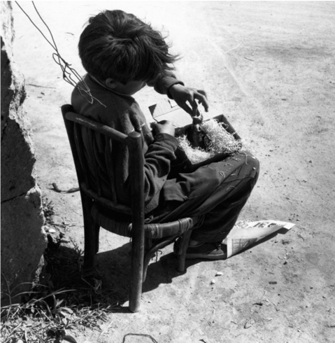 Молодой цыган кормит птицу, которая выпала из гнезда.