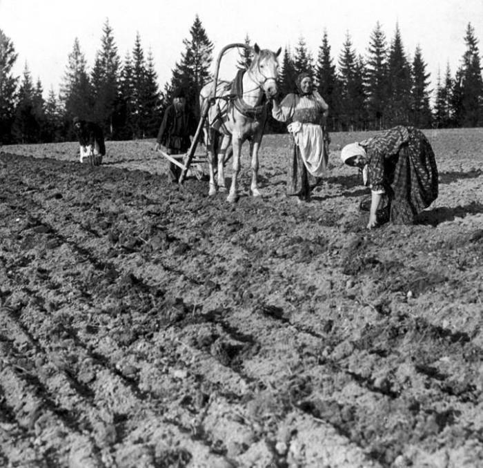 Крестьяне засевают поле.