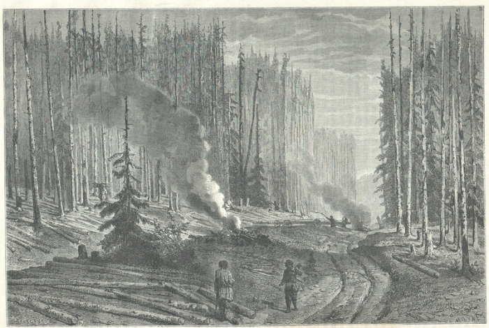 Превращения земель, занятых лесом, в земельные угодья без древесного покрова.