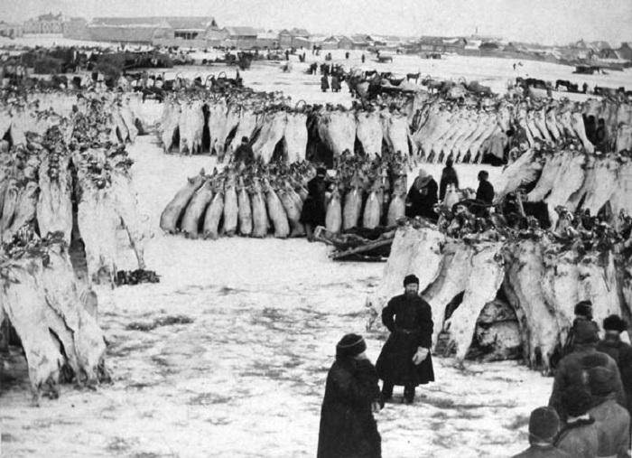 Торговля мясными тушами Курган, 1903 год.