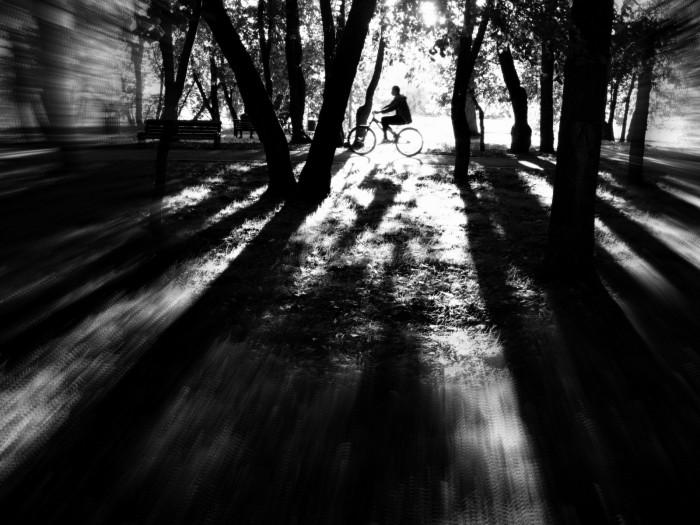 Прогулка по вечернему парку. Автор фотографии: Проничкин Александр.