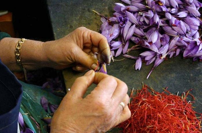 Высушенные рыльца цветка определенного вида ирисовых.